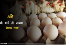 egss facts in hindi
