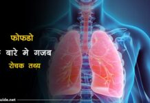 lungs facts in hindi