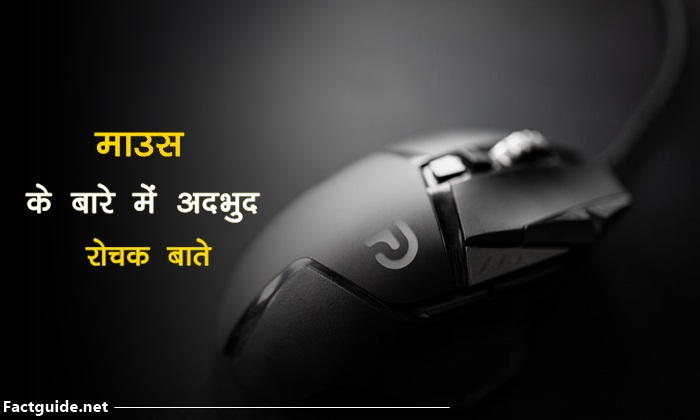 mouse facts In Hindi