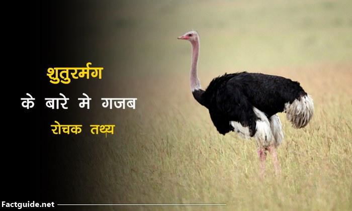 शुतुरमुर्ग के बारे में रोचक तथ्य  | ostrich facts in hindi